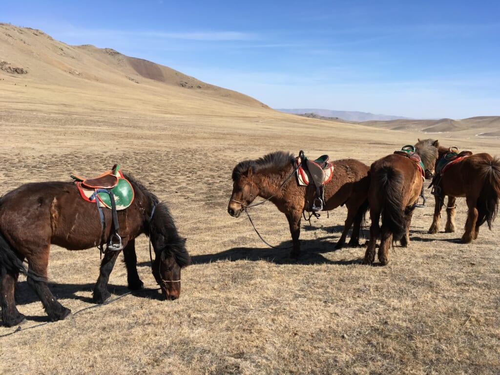 オフショア開発をしていたモンゴルの風景